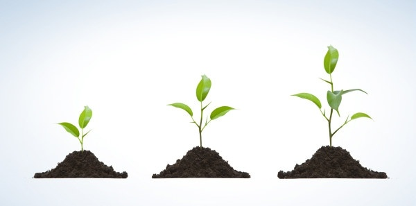 it takes patience to grow a seedling and a relationship